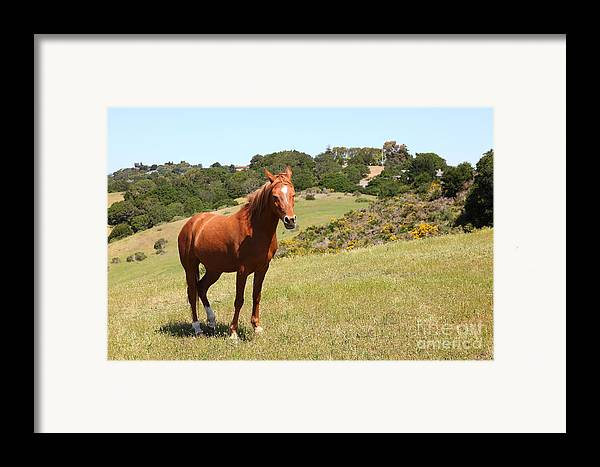 Marin Framed Print featuring the photograph Horse Hill Mill Valley California 5d22679 by Wingsdomain Art and Photography