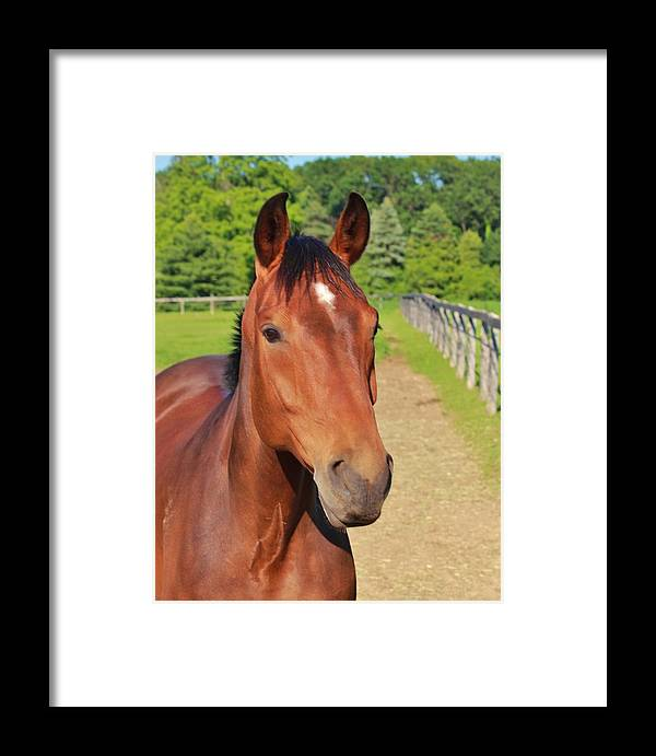 Horse Framed Print featuring the photograph Horse In Stable by Jim Koniar