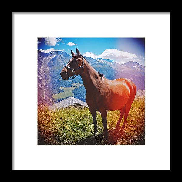Horse Framed Print featuring the photograph Horse in the alps by Matthias Hauser