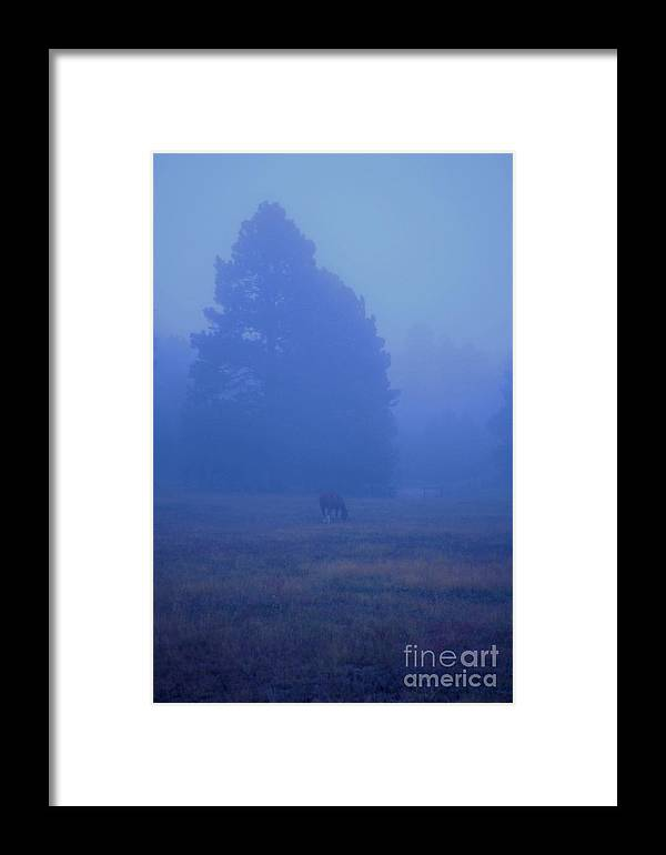 Fog Framed Print featuring the photograph Horse In The Fog by Bill Long