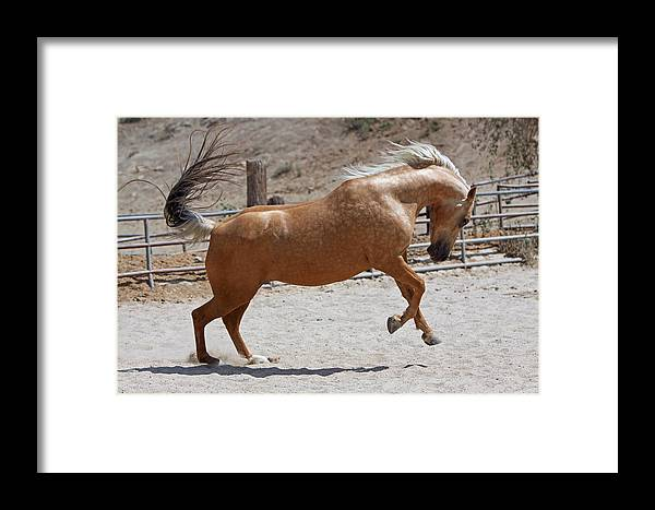 Horse Framed Print featuring the photograph Horse Jumping by Shoal Hollingsworth