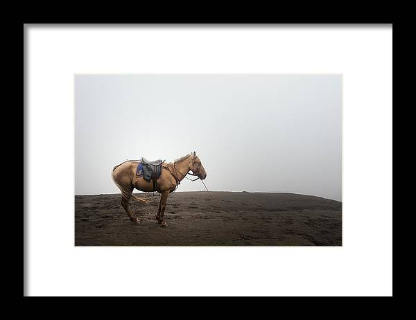 Horse Framed Print featuring the photograph Horse On A Mountain On A Foggy Day by Carlina Teteris