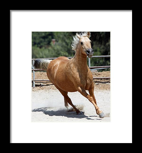 Horse Framed Print featuring the photograph Horse On The Run by Shoal Hollingsworth