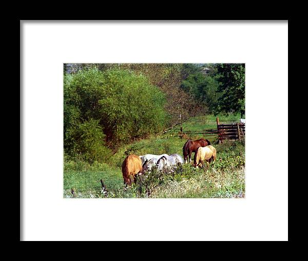 Equine Framed Print featuring the digital art Horse Pasture by Cassie Peters