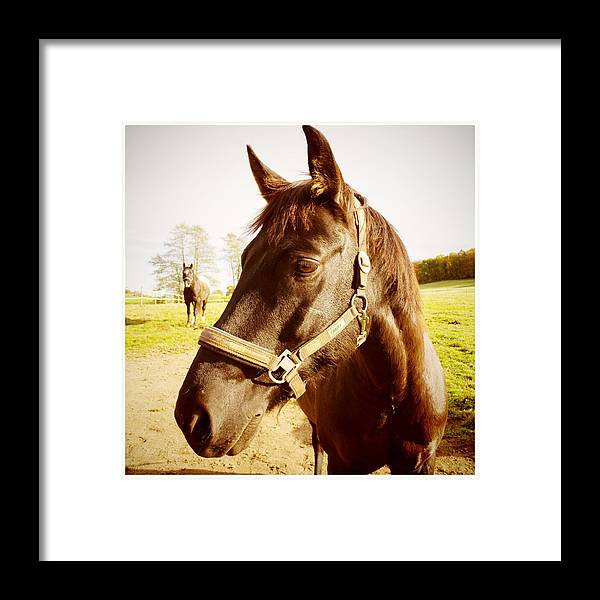 Horse Framed Print featuring the photograph Horse portrait by Matthias Hauser