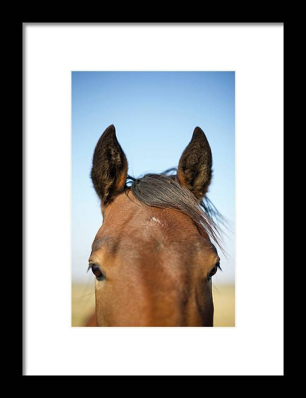 Horse Framed Print featuring the photograph Horse Standing In Pasture In Autumn by Chris Hendrickson
