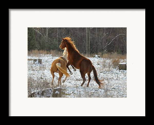 Paul Lyndon Phillips Framed Print featuring the photograph Horses At Play - 10dec5690b by Paul Lyndon Phillips