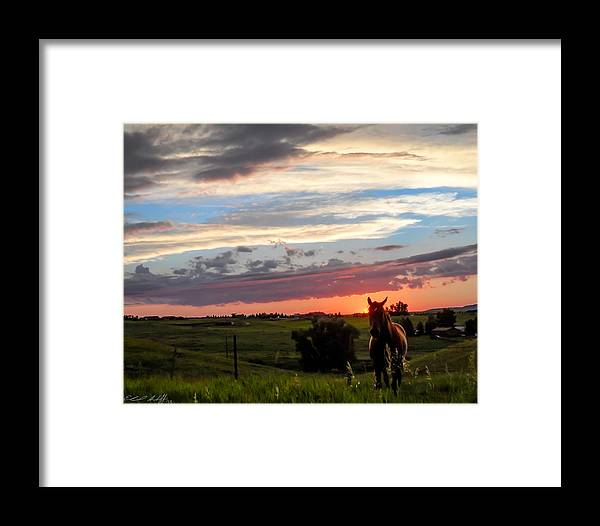 Horse Framed Print featuring the photograph Horsin' Around by Edward Shaffer