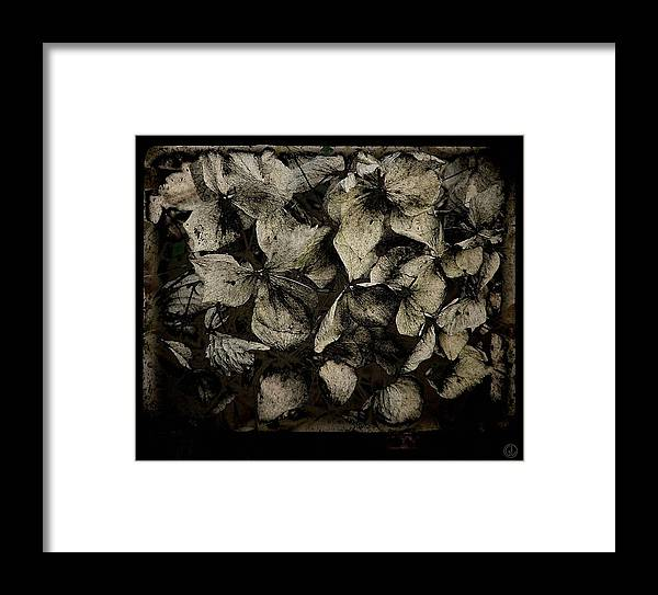 Plant Framed Print featuring the digital art Hortensia by Gun Legler