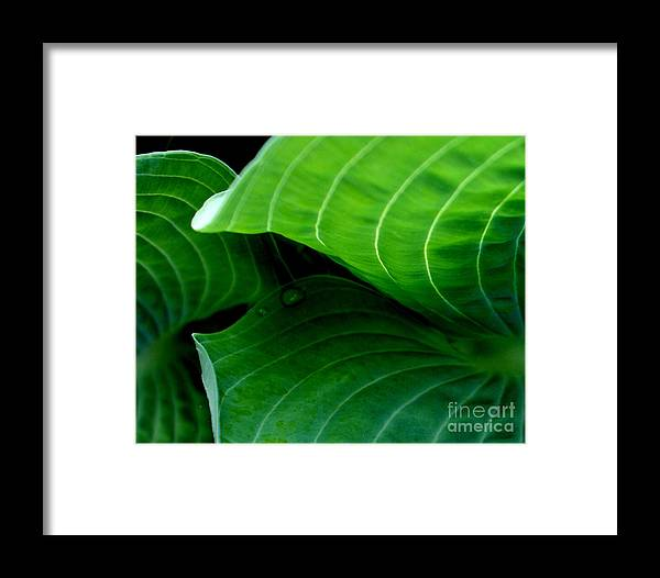 Green Framed Print featuring the photograph Hosta Tunnel by Valerie Fuqua