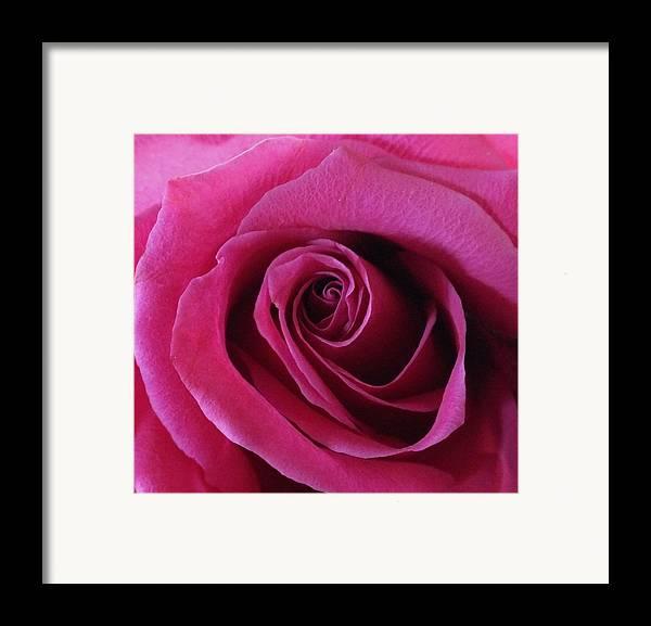 Pink Framed Print featuring the photograph Hot Pink II by Anna Villarreal Garbis