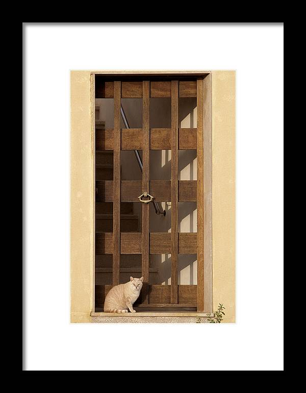 Photo Framed Print featuring the photograph house keeper - A guardian cat is the best way to secure your home by Pedro Cardona Llambias
