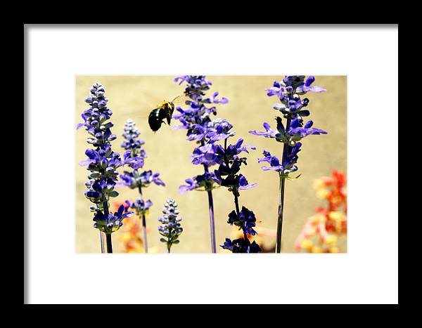 Hover Framed Print featuring the photograph Hover by Off The Beaten Path Photography - Andrew Alexander