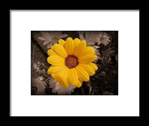 Sun Flower Framed Print featuring the painting How Fresh... by Utkarsh Maheshwari