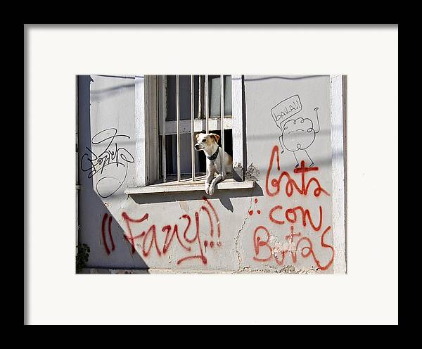 Dog Framed Print featuring the photograph How Much Is That Doggie In The Window? by Kurt Van Wagner