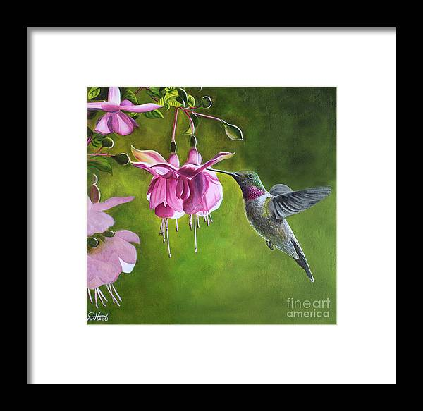 Hummingbird Framed Print featuring the painting Hummingbird And Fuschia by Debbie Hart