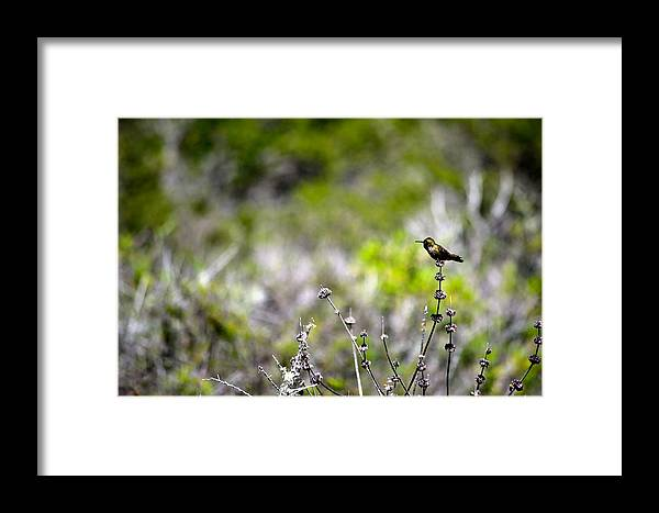 Green Framed Print featuring the photograph Hummingbird In Green by Marc Levine