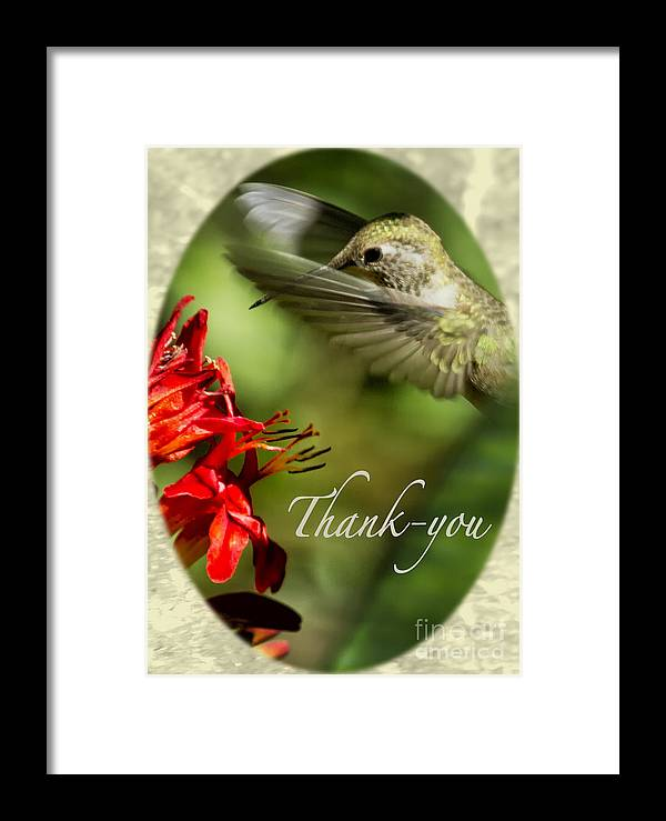 Thank-you Card Framed Print featuring the photograph Hummingbird Thanks by Belinda Greb