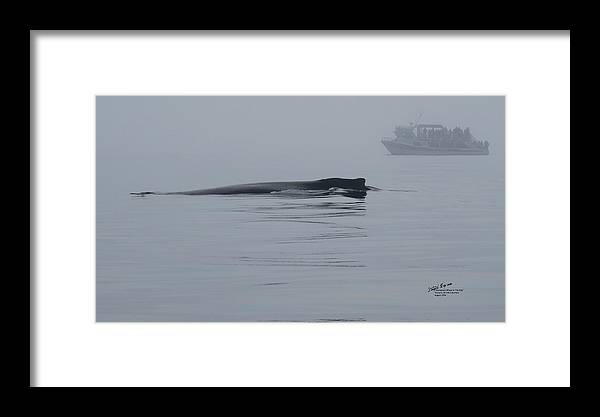 Whale Framed Print featuring the photograph Humpback Whale In The Fog by Steph Maxson