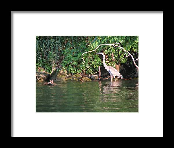 Crane Framed Print featuring the photograph Hungry Crane by Gina Boebel