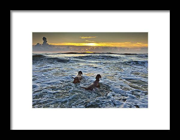 Sunrise Framed Print featuring the photograph Hunting Sharks by Razvan Balotescu
