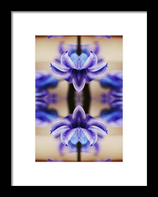 Purple Framed Print featuring the photograph Hyazinth by Silvia Otte