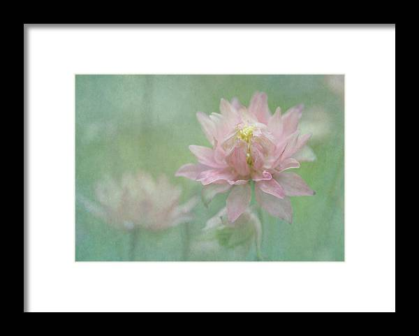 Columbine Framed Print featuring the photograph Hybrid Columbine by Angie Vogel