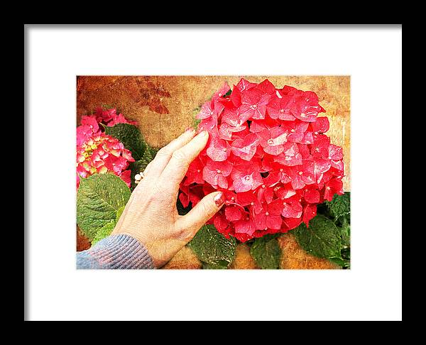 Hydrangea Framed Print featuring the digital art Hydrangea by Helene U Taylor