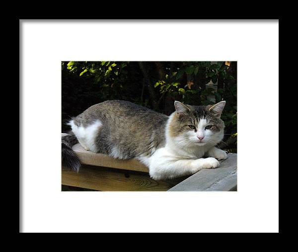 Cat Photography Framed Print featuring the photograph I Had A Great Dinner And Now Ready For Nap by Lingfai Leung