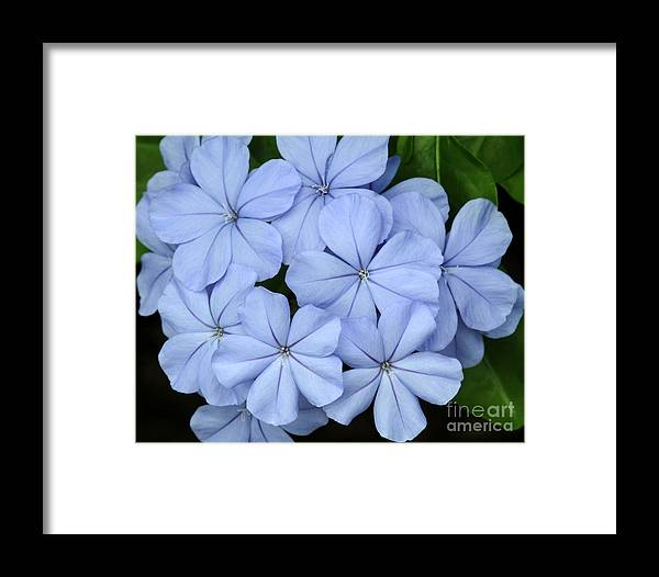 Macro Framed Print featuring the photograph I Love Blue Flowers by Sabrina L Ryan