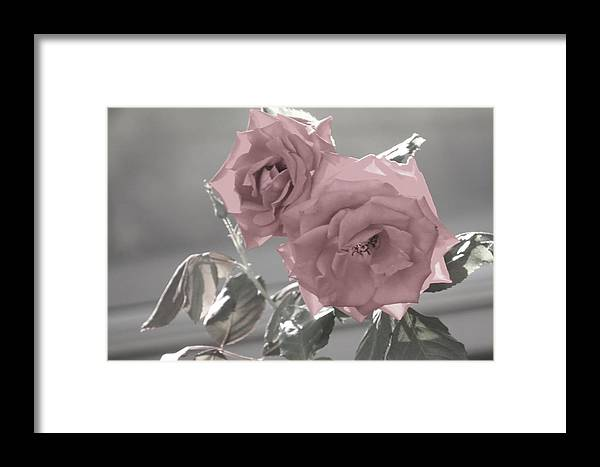 Flowers Framed Print featuring the photograph I Love You Rose by Jeanette Oberholtzer