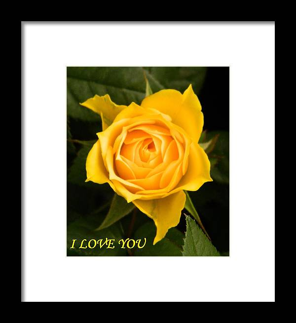 f45acf67fdaad I love you Love you Yellow roses t