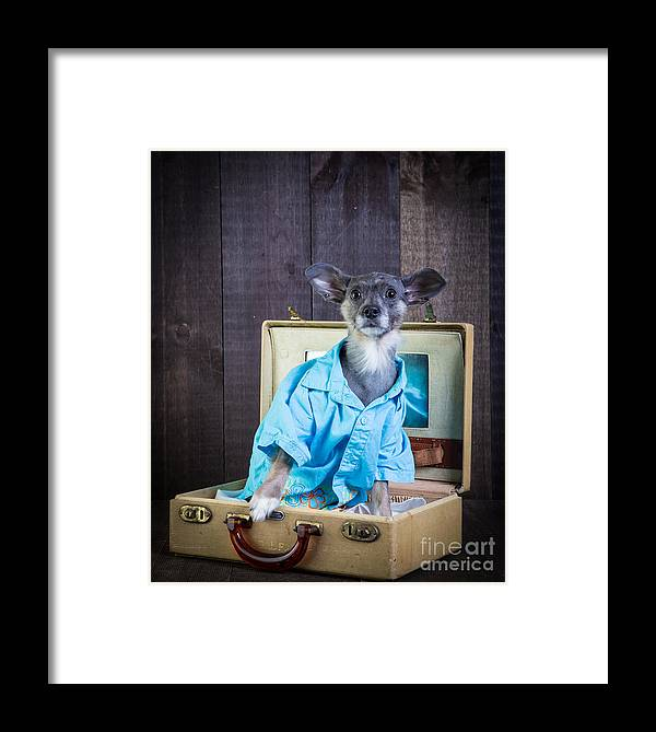 Dog Framed Print featuring the photograph I Need A Vacation by Edward Fielding