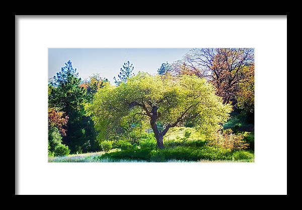 Framed Print featuring the photograph I See Soul And Expression - Julian California Oakscape by Douglas MooreZart