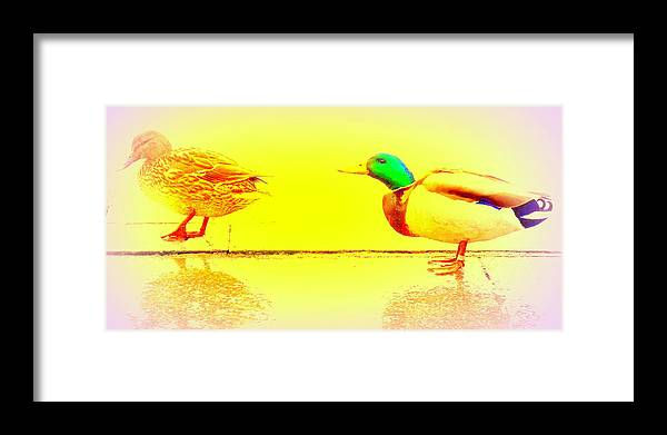 Duck Framed Print featuring the photograph I Try To Follow You But Do You Care by Hilde Widerberg