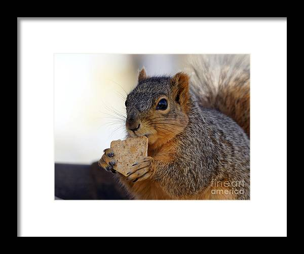 Squirrel Framed Print featuring the photograph I Would Like A Wheat Thin...please by Lori Tordsen