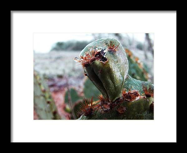 Cactus Framed Print featuring the photograph Ice Cactus by Stephen Paul West