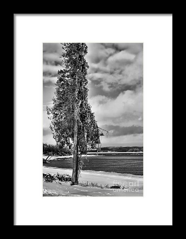 Ice Framed Print featuring the photograph Ice Coated Tree by Louise Heusinkveld