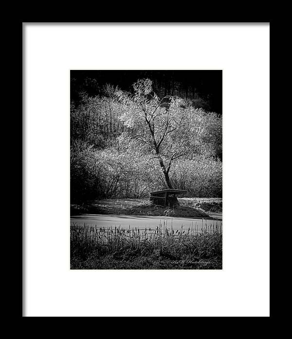 Tree Framed Print featuring the photograph Ice Storm by Keith Hutchings