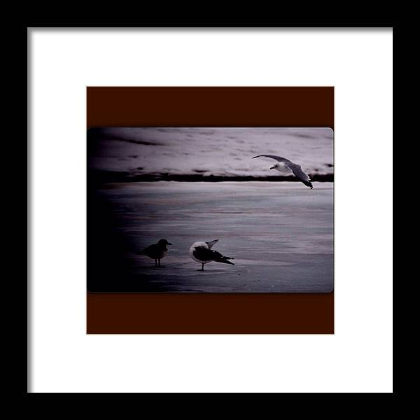 Framed Print featuring the photograph Iceflight by Altagrace Gaspard