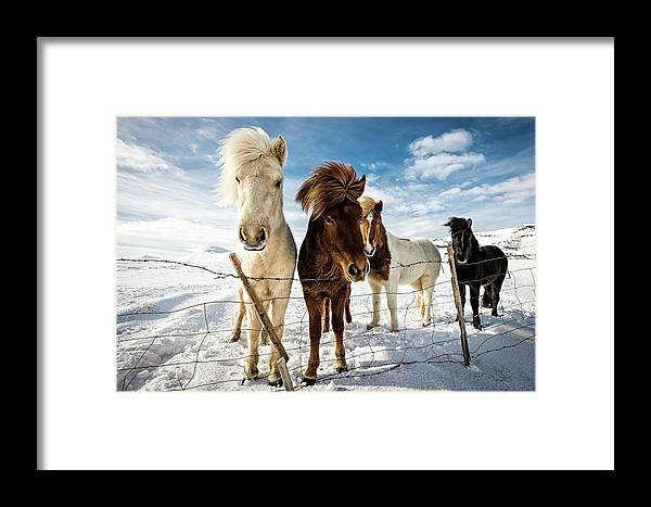 Landscape Framed Print featuring the photograph Icelandic Hair Style by Mike Leske