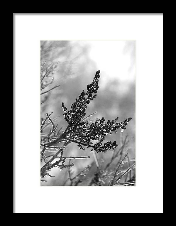 Ice Framed Print featuring the photograph Icy by Becca Wilcox