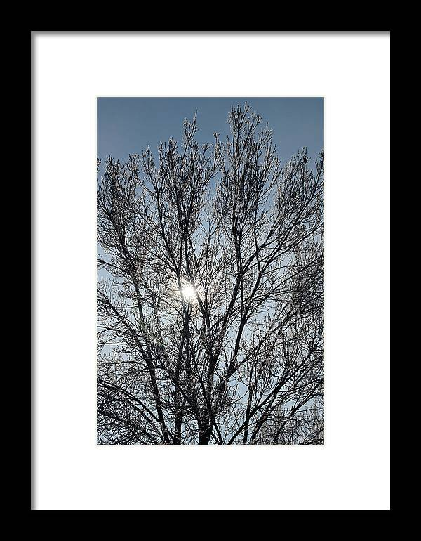 Icy Framed Print featuring the photograph Icy Tree - Winter Morning by Mick Anderson