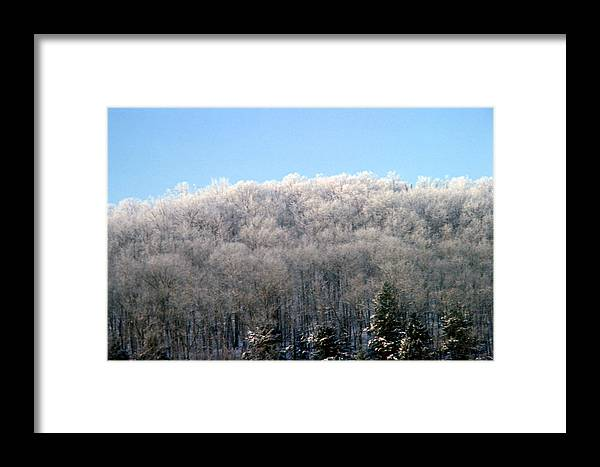 Trees Framed Print featuring the photograph Icy Trees by Brian Lucia
