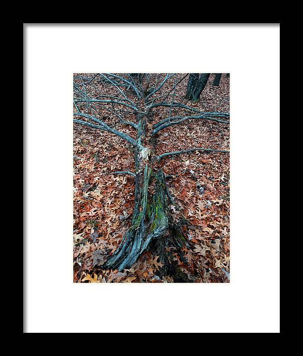 Tree Framed Print featuring the photograph If A Tree Falls In The Woods by David T Wilkinson