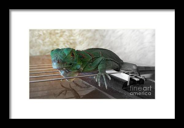 Iguana Framed Print featuring the mixed media ig by Jackie Bodnar