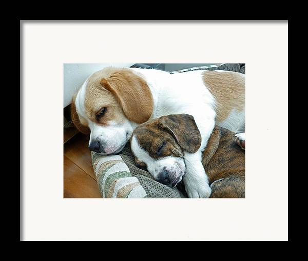 Dog Framed Print featuring the photograph Iggy And Bogie by Felix Concepcion