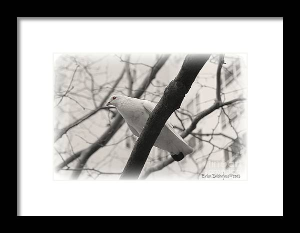 Pigeon Framed Print featuring the photograph I'll Be Right Over by Brian Seidenfrau