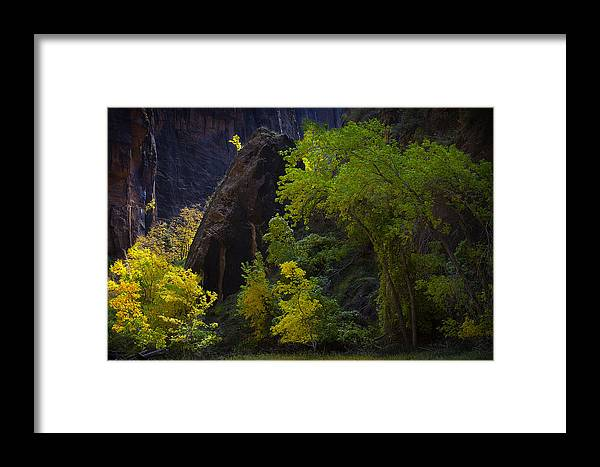 Landscape Framed Print featuring the photograph Illuminated Shrub by Dominique Dubied