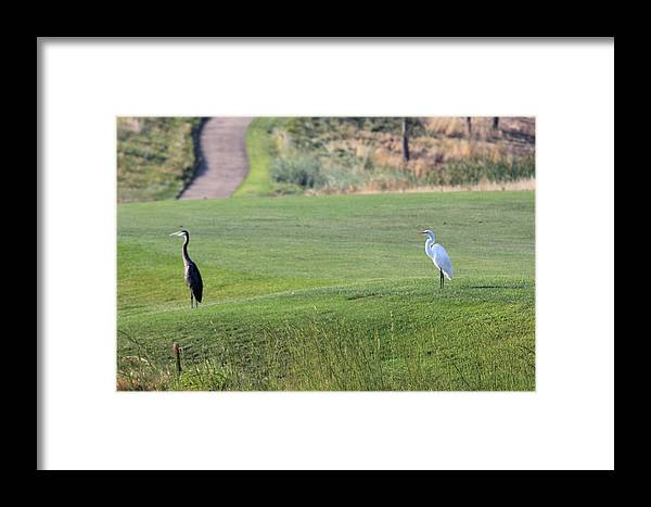 Herons Framed Print featuring the photograph Illusion by Raquel Amaral
